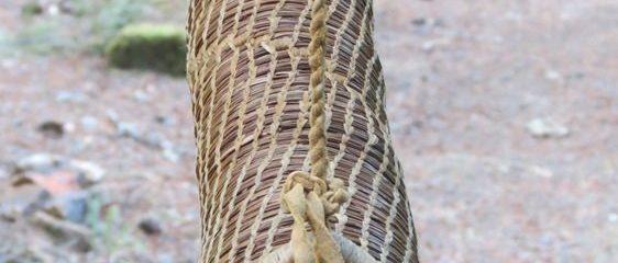 pine needle quiver